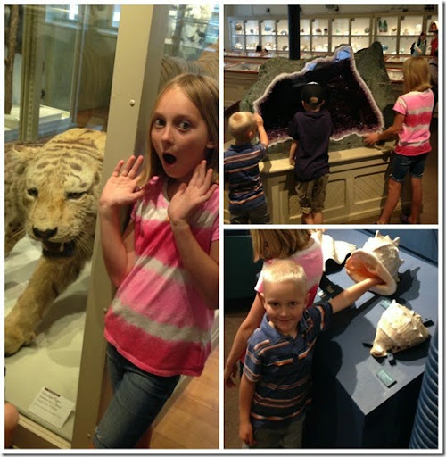 harvard museum of natural historyCollage