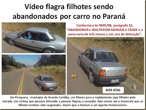 Vídeo flagra filhotes sendo abandonados por carro no
