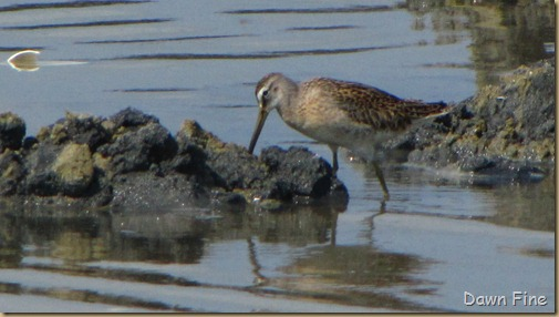 Birding Clamming_016