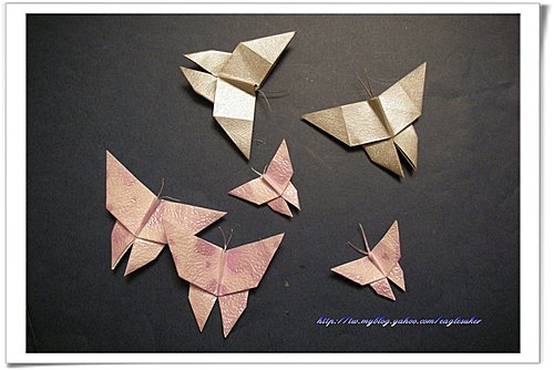 Eagle 摺紙: 摺紙教學 蝴蝶 Butterfly
