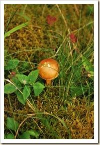 mushroom 22