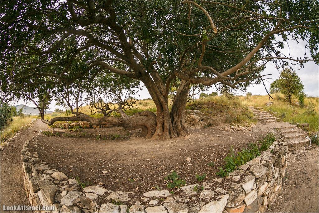 LookAtIsrael.com: Фото-блог о путешествиях по Израилю. Тель Авив, Иерусалим, Хайфа Затем утренний кофе-чай-арбуз и отправляемся в первый коротенький поход