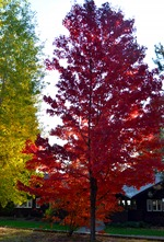 fall color_90