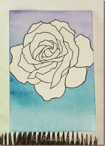 rose colourwash bg