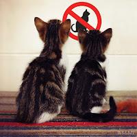 no_cats_allowed_by_mikatrta-d4e0neb.jpg