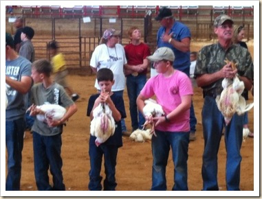holding broilers