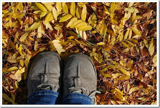 fall 019