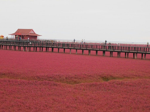 panjin-red-beach-8
