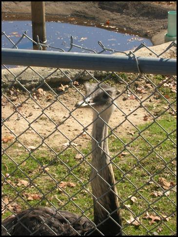 Richmond Metro Zoo 3rd Grade MES Field Trip 118