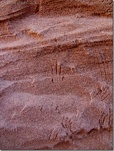 06 Lizard tracks on sand along Wire Pass trail UT (768x1024)