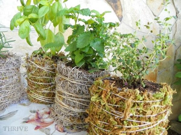 herbs.3