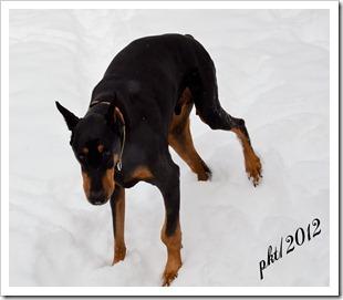 DSC_6850Jefferson-left-leg-bone-cancer