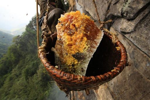 honey-cacciatori-nepal-29