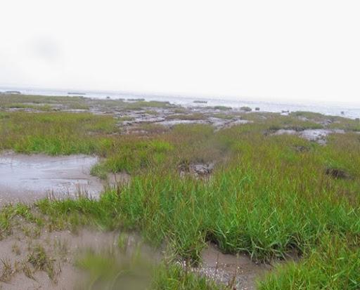 Spurn Point in the rain (5)