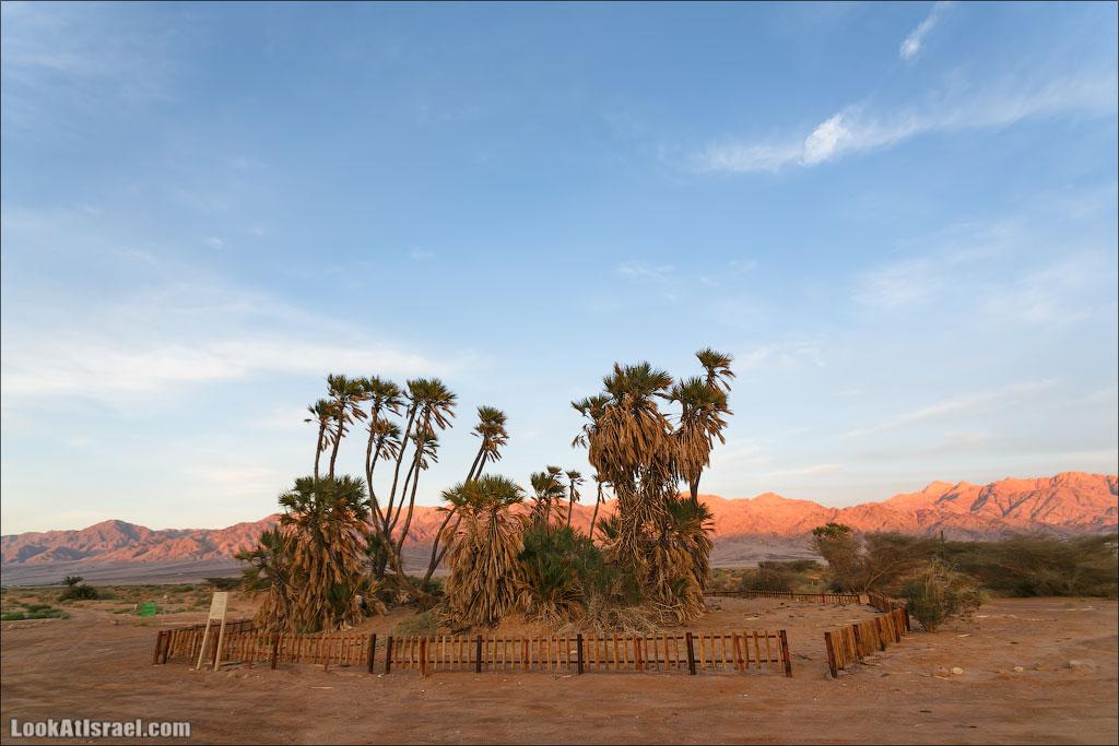 Дум пальмы | LookAtIsrael.com - Фото путешествия по Израилю