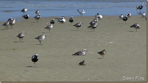 Birding Clamming_007