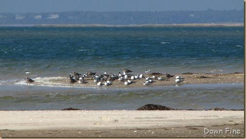 Birding south beach_082