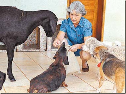 delegacia-animais