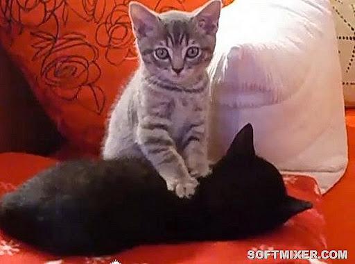 84525616_catmassage5