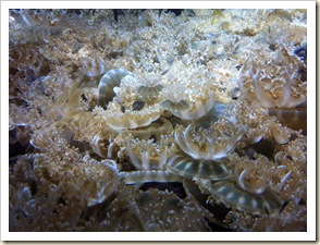 more jelly fish