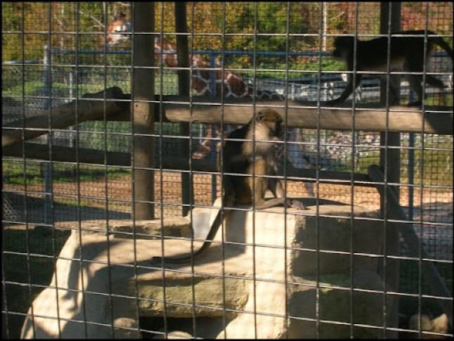 Richmond Metro Zoo 3rd Grade MES Field Trip 057