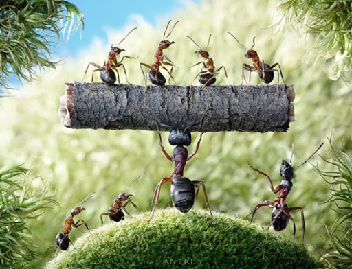 Life-of-Ants-Andrey-Pavlov-20