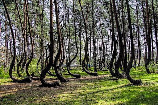 storto-foresta-1