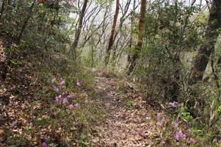 山口ダムへの道