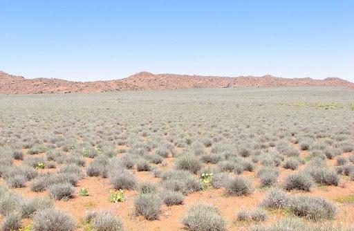 Namaqualand-flores-5