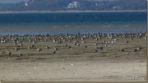 Birding south beach_093