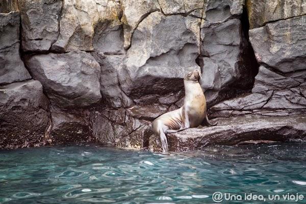 viajar-islas-galapagos-actividades-gratuitas-gratis-baratas-santa-cruz-unaideaunviaje-11.jpg