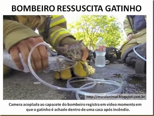 BOMBEIRO RESSUSCITA GATINHO