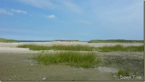 birding south beach_014 (1)