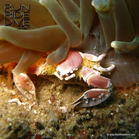 Run Ride Dive News