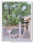 【印度佛教之旅】慕爾甘陀哈庫提寺院Mulgandha Kuti Vihara旁的菩提樹