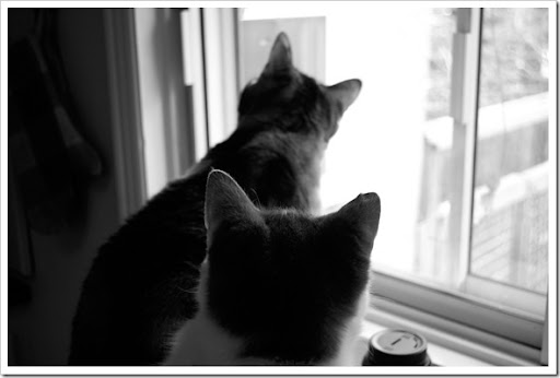cats bw