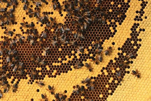 honey-cacciatori-nepal-30