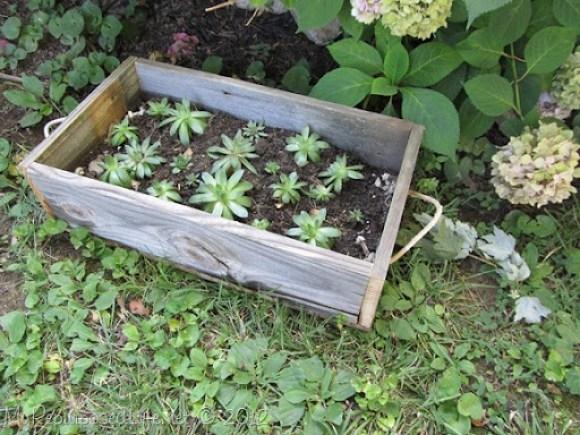 reclaimed fence planter (hens & chicks)