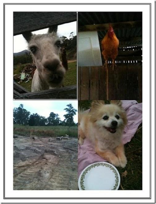 lyndas bday 2012 animals