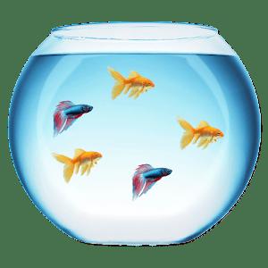 download My Fish Bowl Live Aquarium apk
