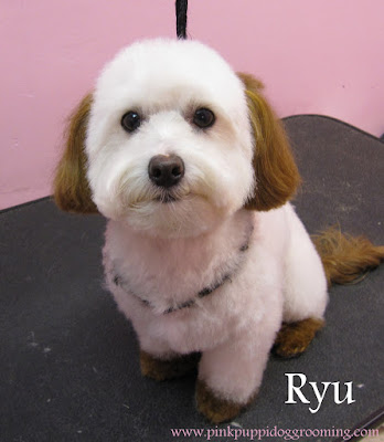 Ryu The Maltese