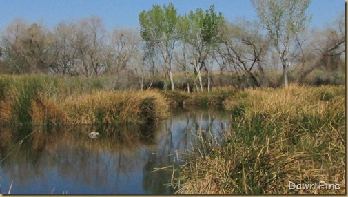 sweetwater wetlands_101