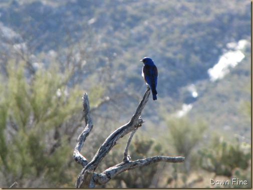 bird walk catalina state park_015