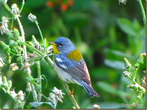 Bird fallout padre_073