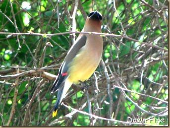 big sit birds_022