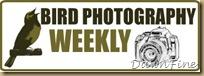 bird photog weekly