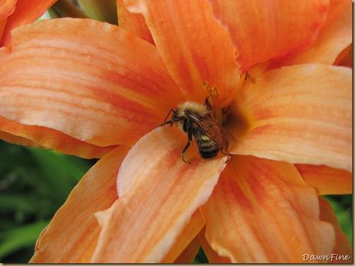 loris garden_20090718_017