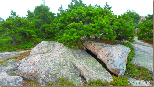 Gorham mt hike_128