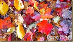 Autumn_037