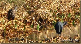 Viera wetlands_052